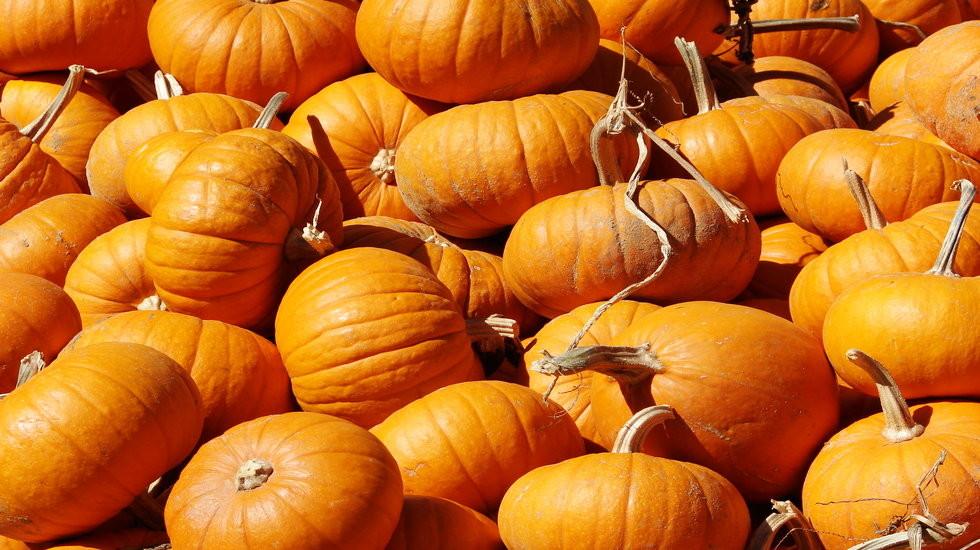 rsz_mini_pumpkins_for_website_slider